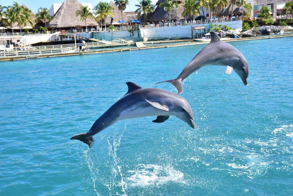 passeios em cancun nado com golfinhos
