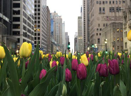 O que fazer em Chicago e arredores: nosso roteiro nos EUA