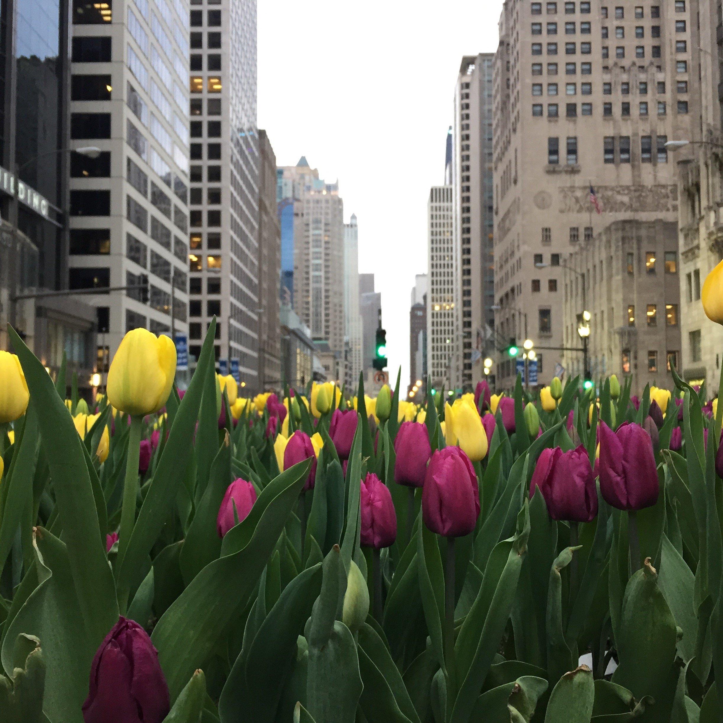 962a9d023 O que fazer em Chicago em 2, 3 ou mais dias - guia completo