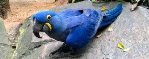 Parque das Aves Foz do Iguaçu – vale a pena?