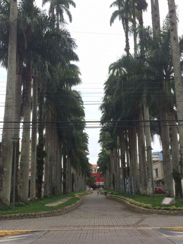 rua das palmeiras joinville