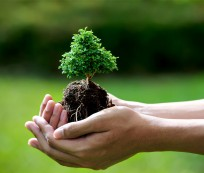 Cuidados com o Bonsai e manutenção da árvore