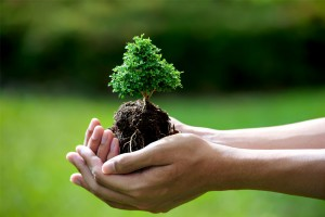 Read more about the article Cuidados com o Bonsai e manutenção da árvore