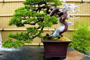 Read more about the article O que são e como se formam os bonsais?