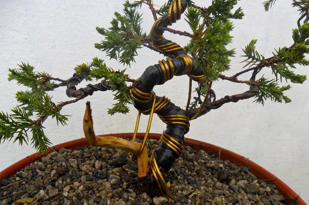 aramação bonsai