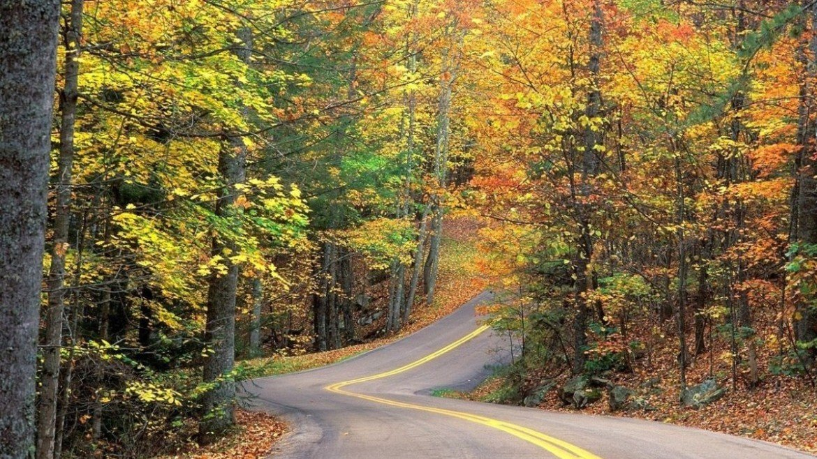 road-in-fall
