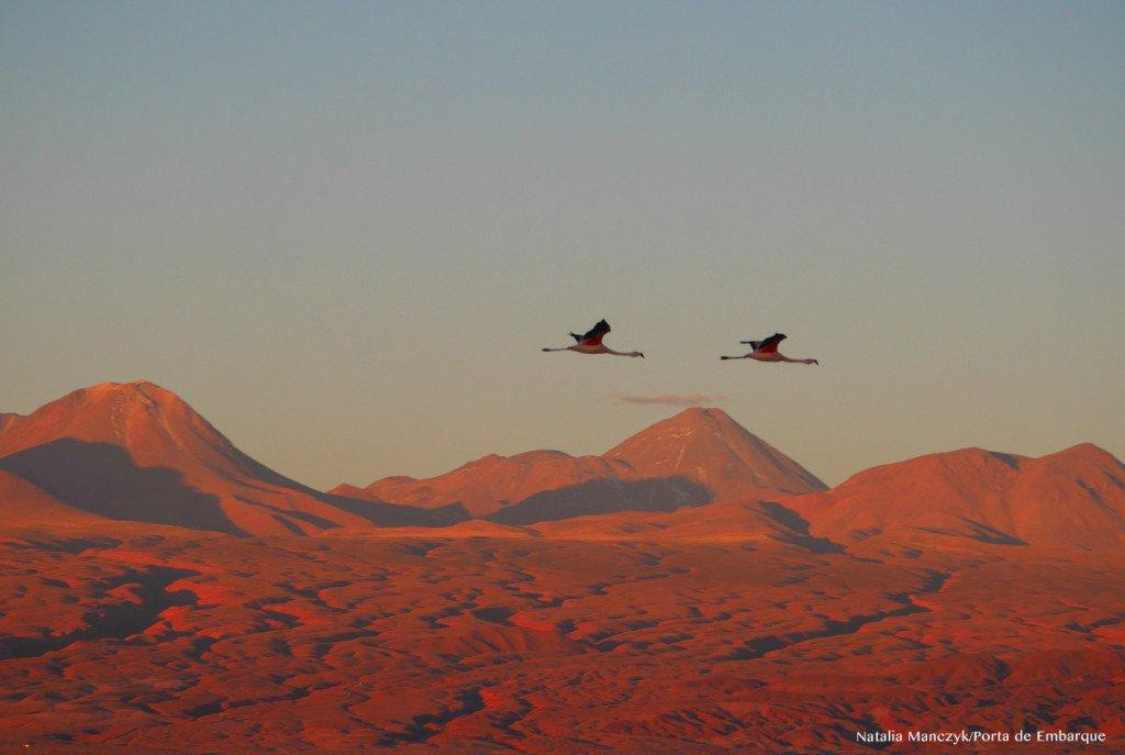 O salar de Atacama é cheio de flamingos: quem sabe você também veja alguns voando no pôr do sol?