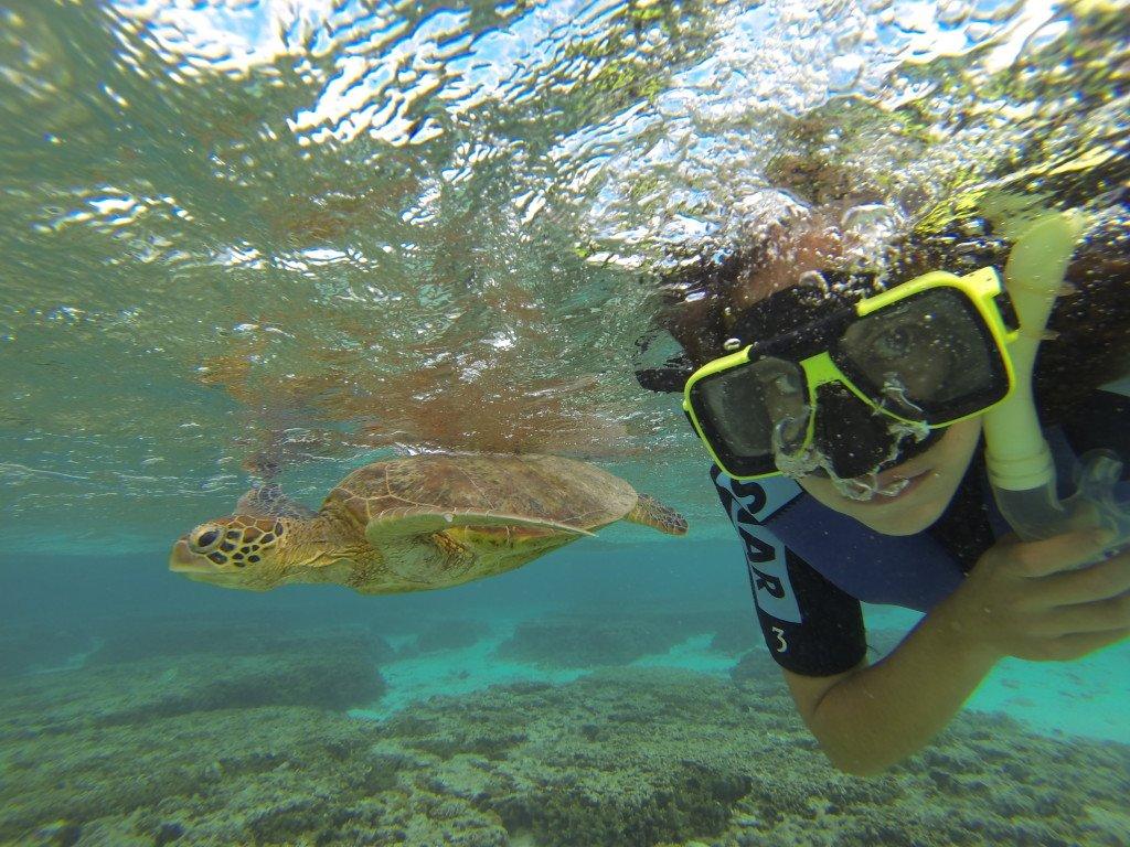 Meu selfie com a tartaruga em Lady Elliot, ilha na Australia