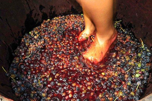 Pisando na uva da vinicola Dall Onder na Serra Gaucha