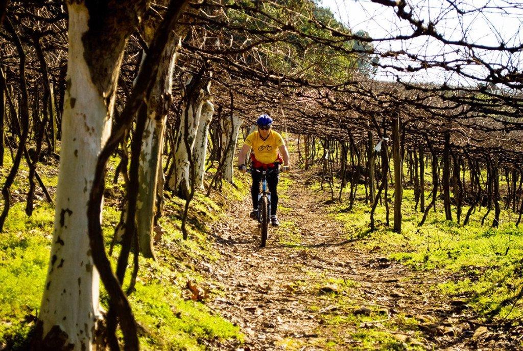 Passeio de bicicleta pelos vinhedos da Serra Gaúcha oferecido pelo hotel Dall'Onder