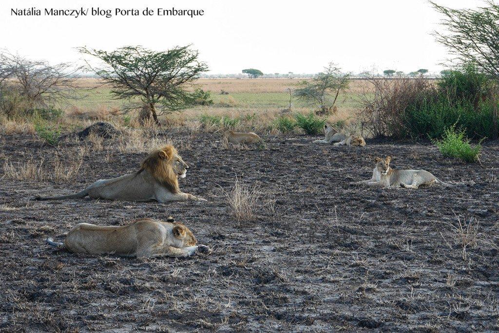 Animais no Serengueti, na Tanzania, quando ir
