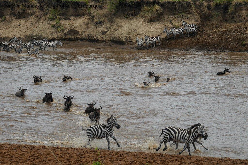Migração dos animais no Serengueti, Tanzania, quando ir