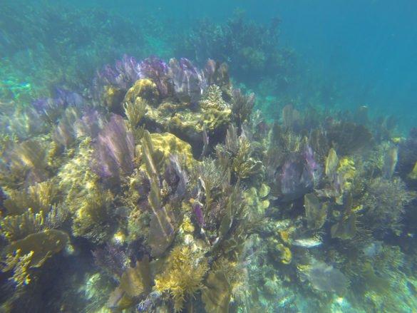 Belize41 585x439 - Conheça Belize: o Caribe só para você!