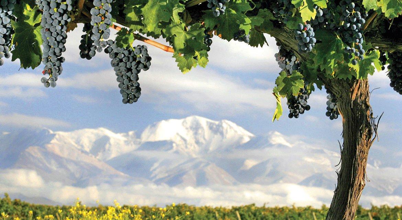 Melhores vinícolas de Mendoza
