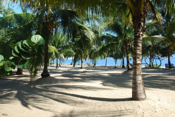 north beaach with palm shadows h e1512190431112 585x392 - Onde ficar em Belize
