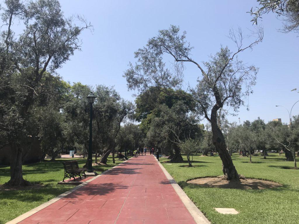 Parque Bosque Olivar_Lima