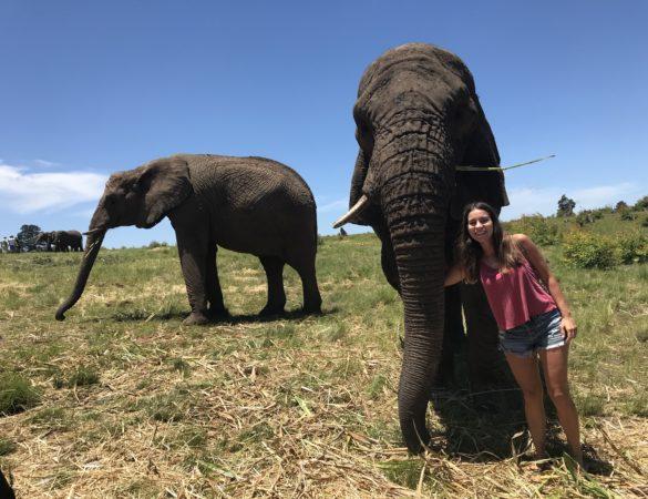 IMG 4146 585x450 - Roteiro de 15 dias na África do Sul