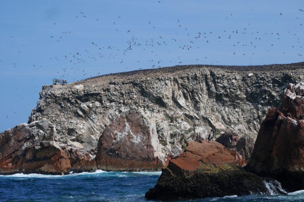 tour para as ilhas ballestas