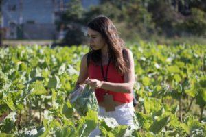 Rota da uva de Jundiaí: uma viagem com muito vinho perto de São Paulo