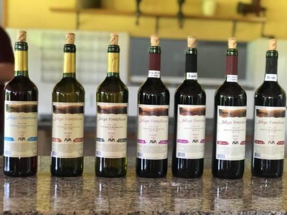 Rota da uva de Jundiaí 1 6 menor 585x439 - Rota da uva de Jundiaí: para provar muito vinho perto de São Paulo