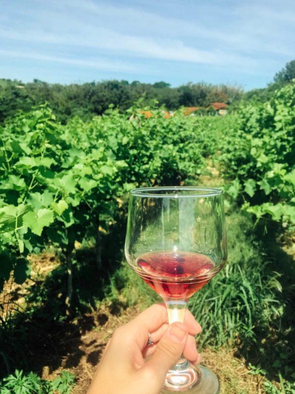 Rota da uva de Jundiaí Fontebasso e1545270019863 585x780 - Rota da uva de Jundiaí: para provar muito vinho perto de São Paulo