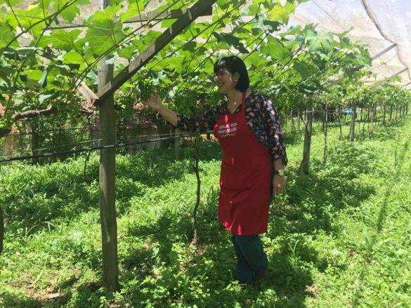 Rota da uva de Jundiaí Adega do Portugues 1 585x439 - Rota da uva de Jundiaí: para provar muito vinho perto de São Paulo