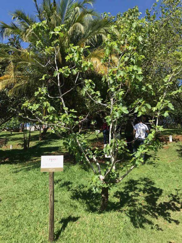 Rota da uva de Jundiaí Brunholi 1 1 585x780 - Rota da uva de Jundiaí: para provar muito vinho perto de São Paulo