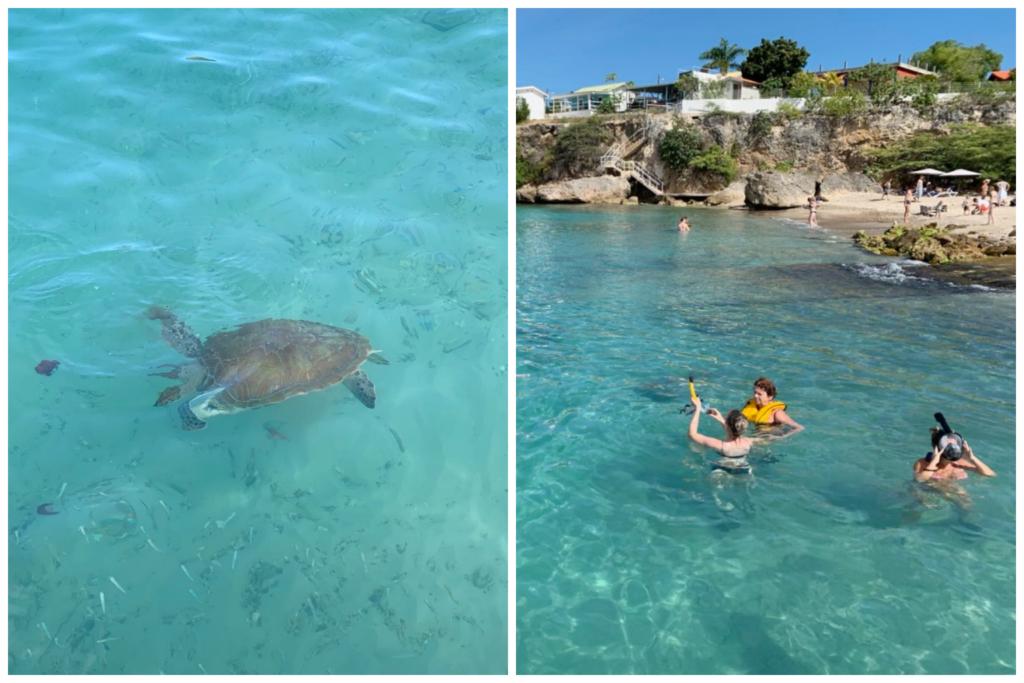 Tartarugas na Playa Piscado_O que fazer em Curacao