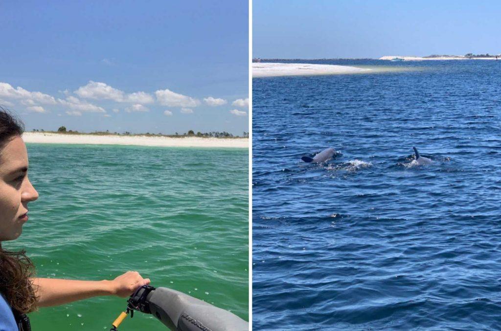 Praia da Florida golfinhos