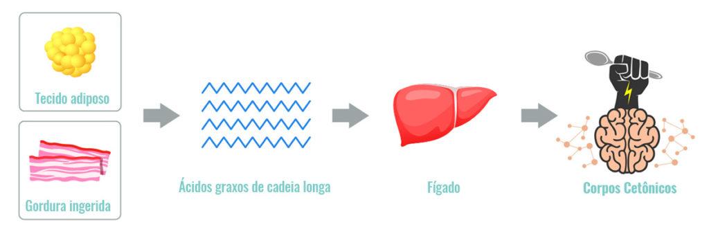 O que são corpos cetônicos? O que é cetogênese? 2