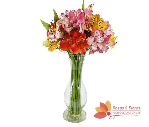 Arranjo de Astromélias Mistas Floricultura Rosas e Flores RJ