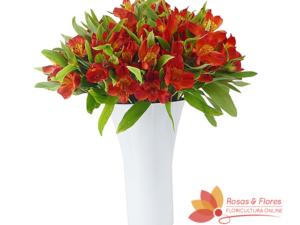 Arranjo de Astromélias Vermelhas Floricultura Rosas e Flores RJArranjo de Astromélias Vermelhas Floricultura Rosas e Flores RJ