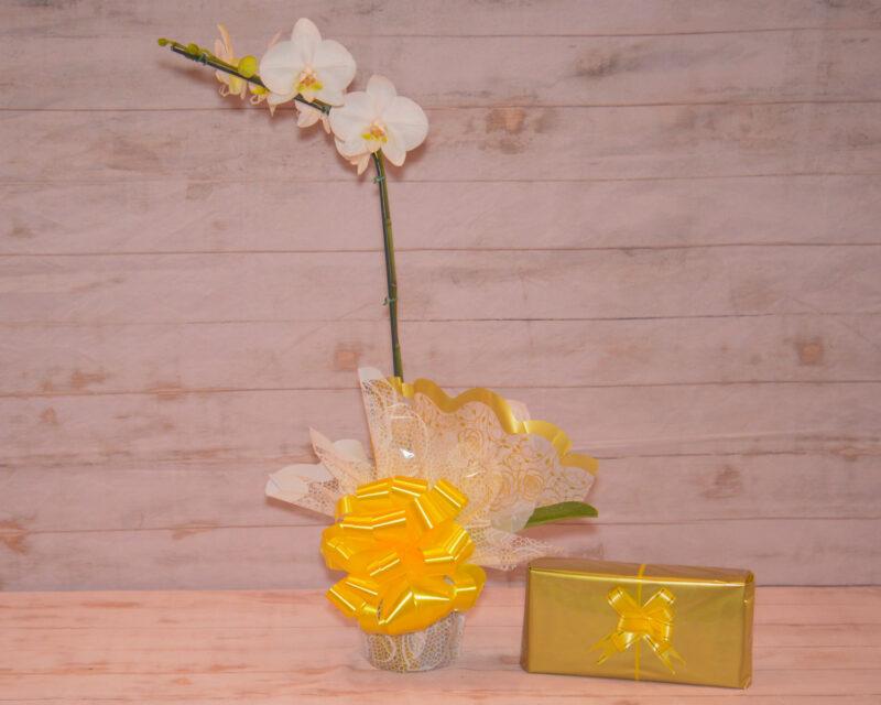 Orquidea-flores-plantadas-floricultura-rosas-e-flores-rj