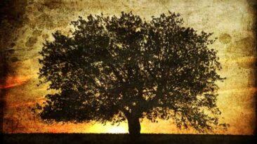 Ascensão Espiritual   Colheita