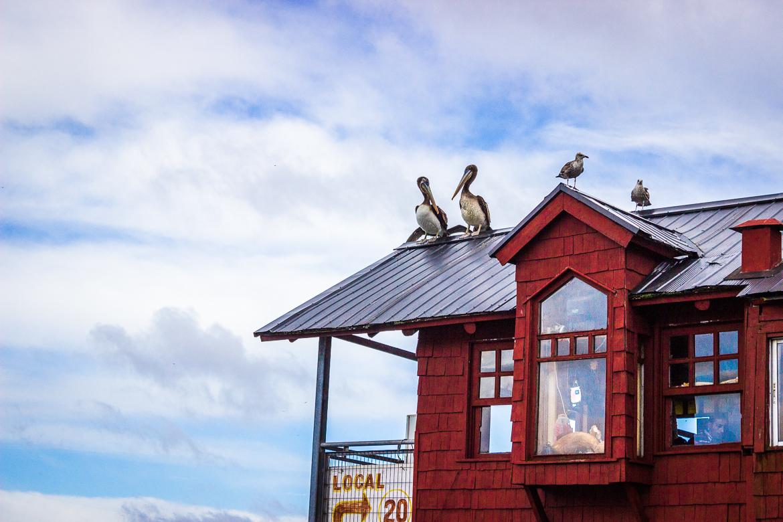 Puerto Montt | Viajando na Janela