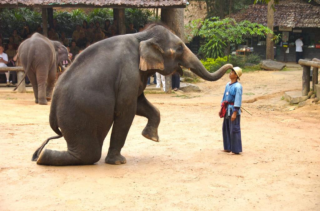 Apresentação de elefantes em Chiang Mai