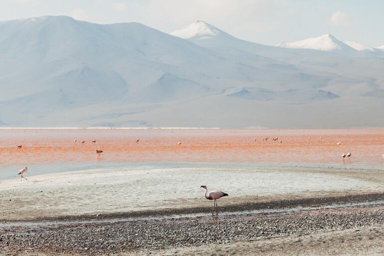 ... e mais flamingos!