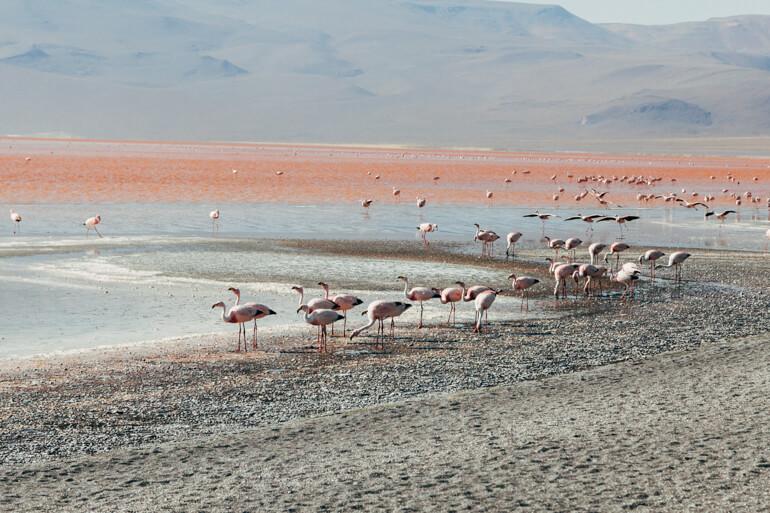 ... e flamingos ....