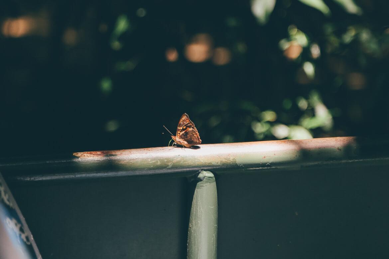 Uma das milhares borboletas que encontramos durante o Macuco Safari
