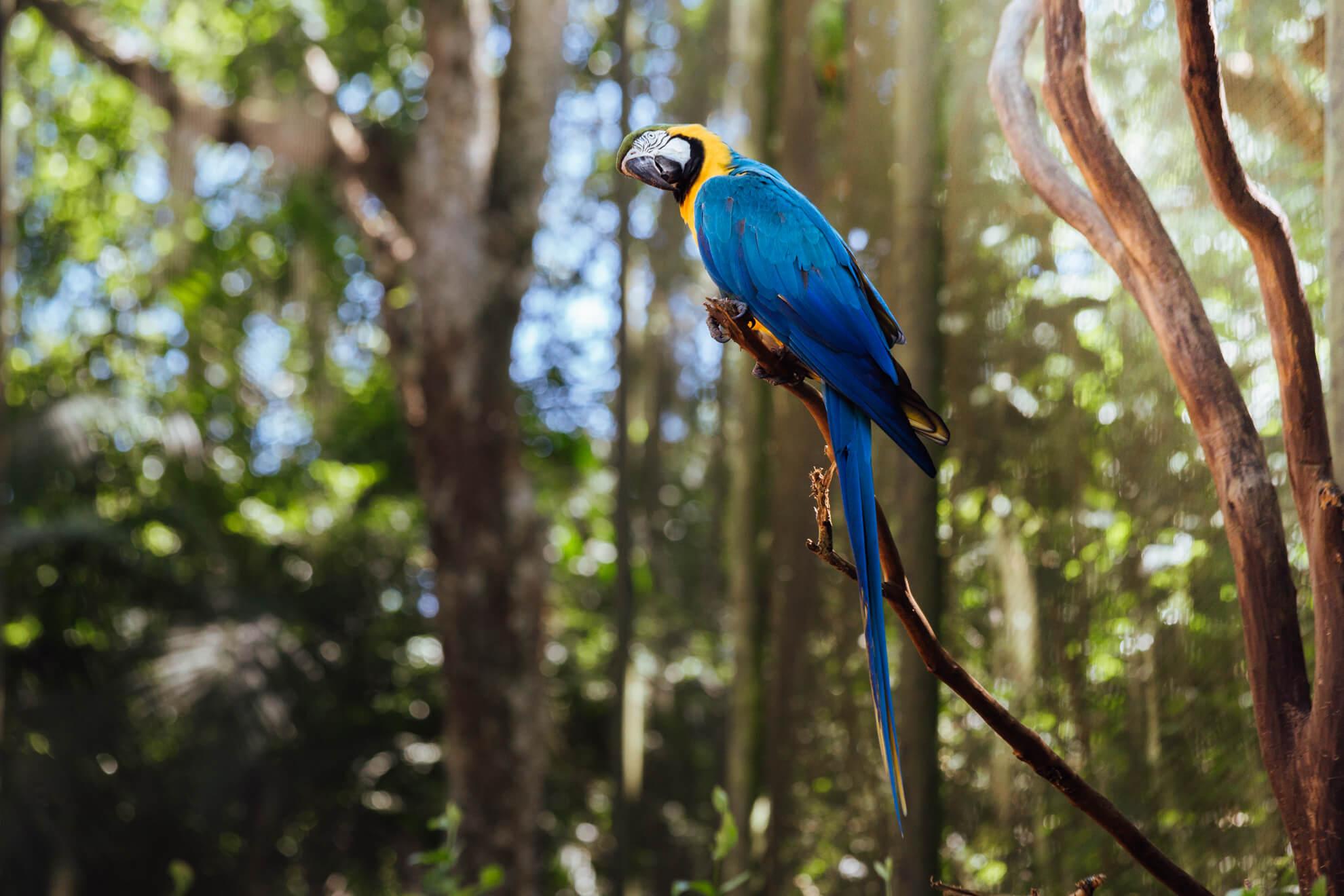 Parque das Aves, Foz do Iguaçu | Arara Canindé