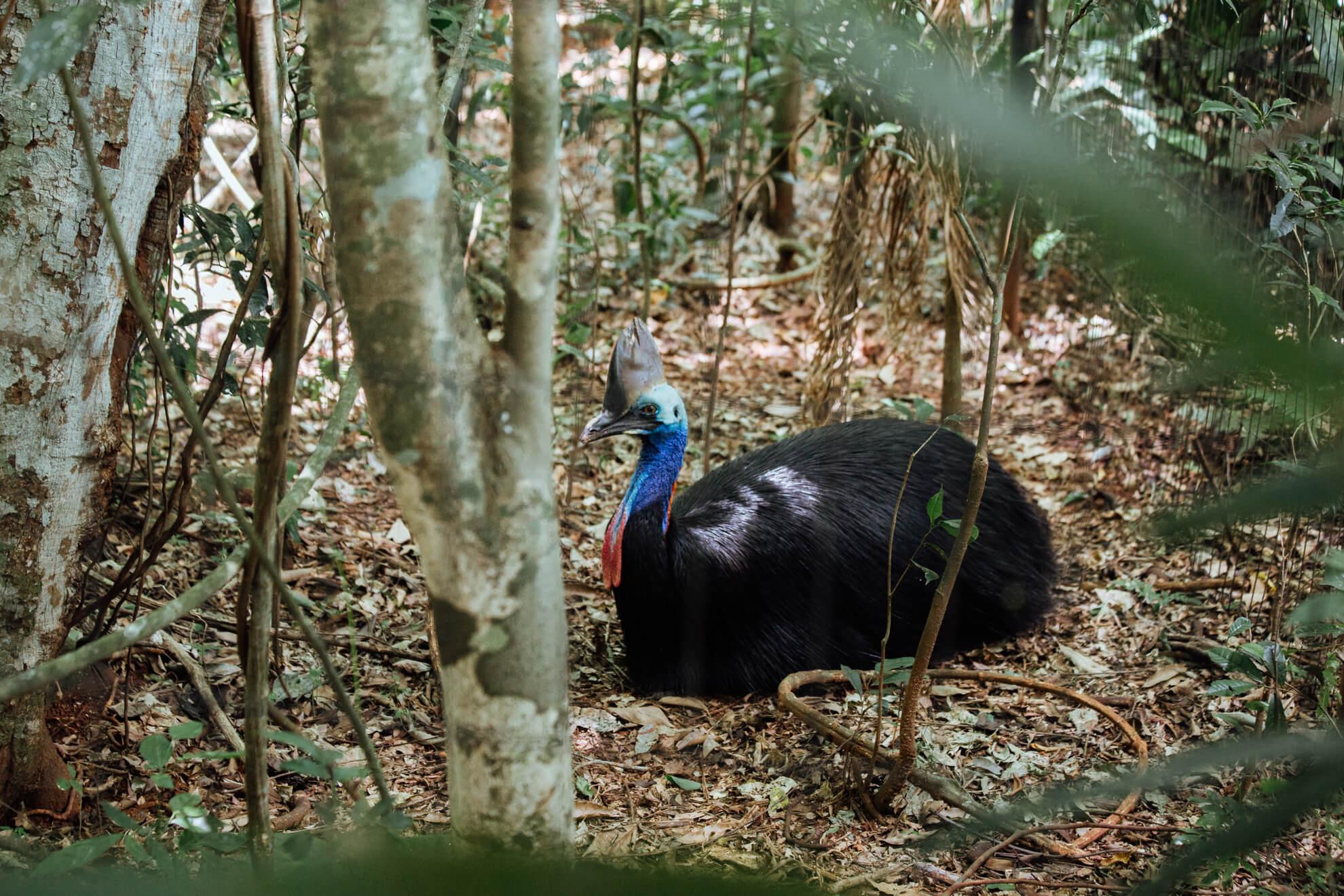 Parque das Aves, Foz do Iguaçu | casuar