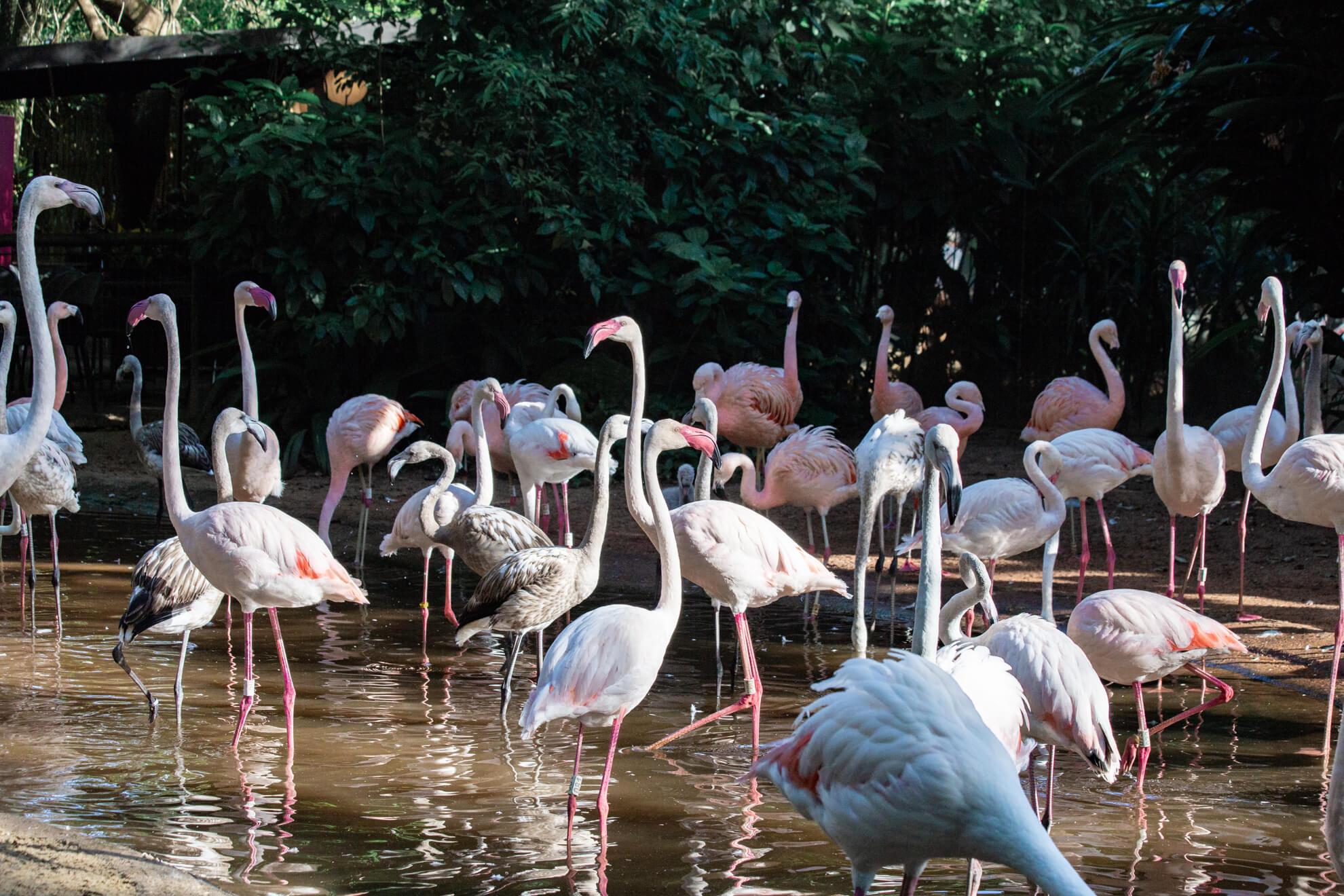 Parque das Aves, Foz do Iguaçu | viveiro dos flamingos