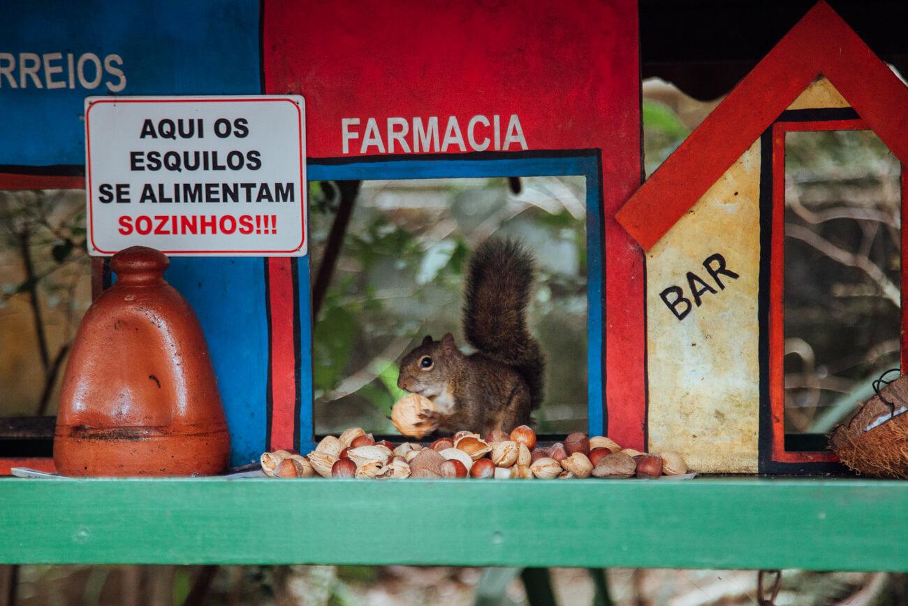O que fazer em Monte Verde (MG): Esquilo no Shopping Celeiro