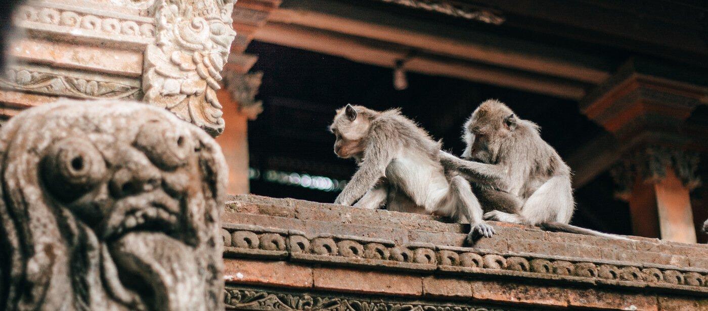Monkey Forest, Bali - Floresta Sagrada dos Macacos
