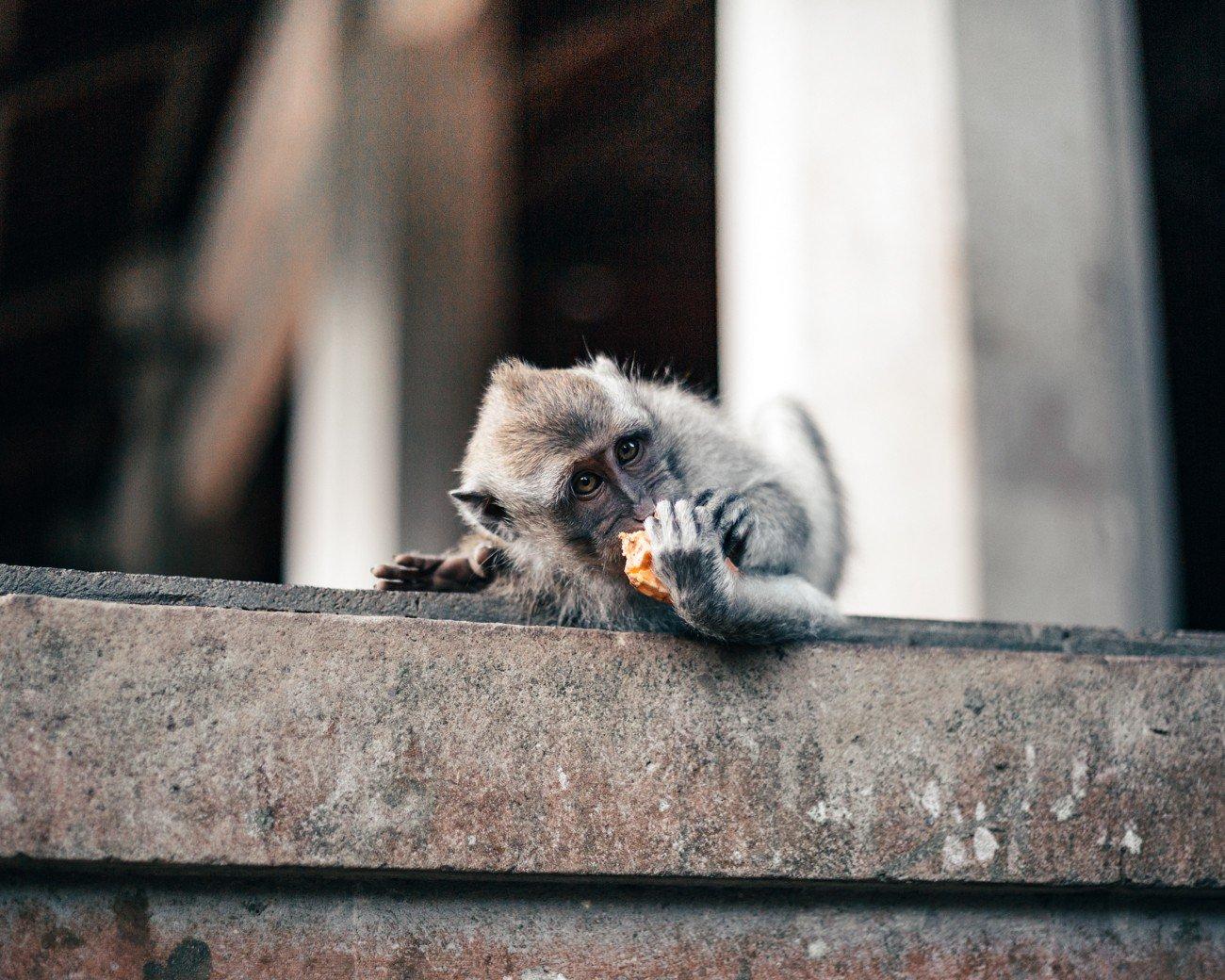 Ubud, Indonésia - Monkey Forest