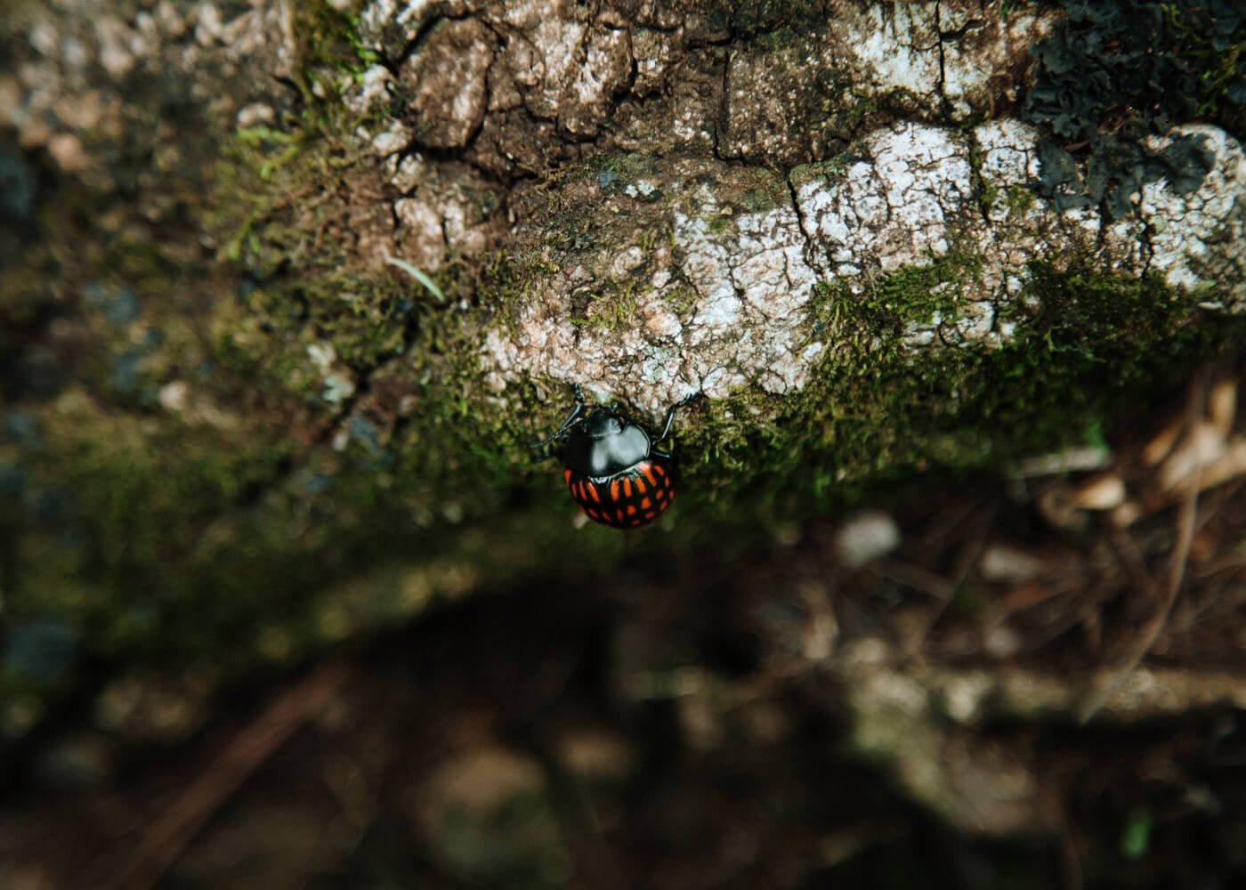 Ecoparque Cassorova Brotas - inseto