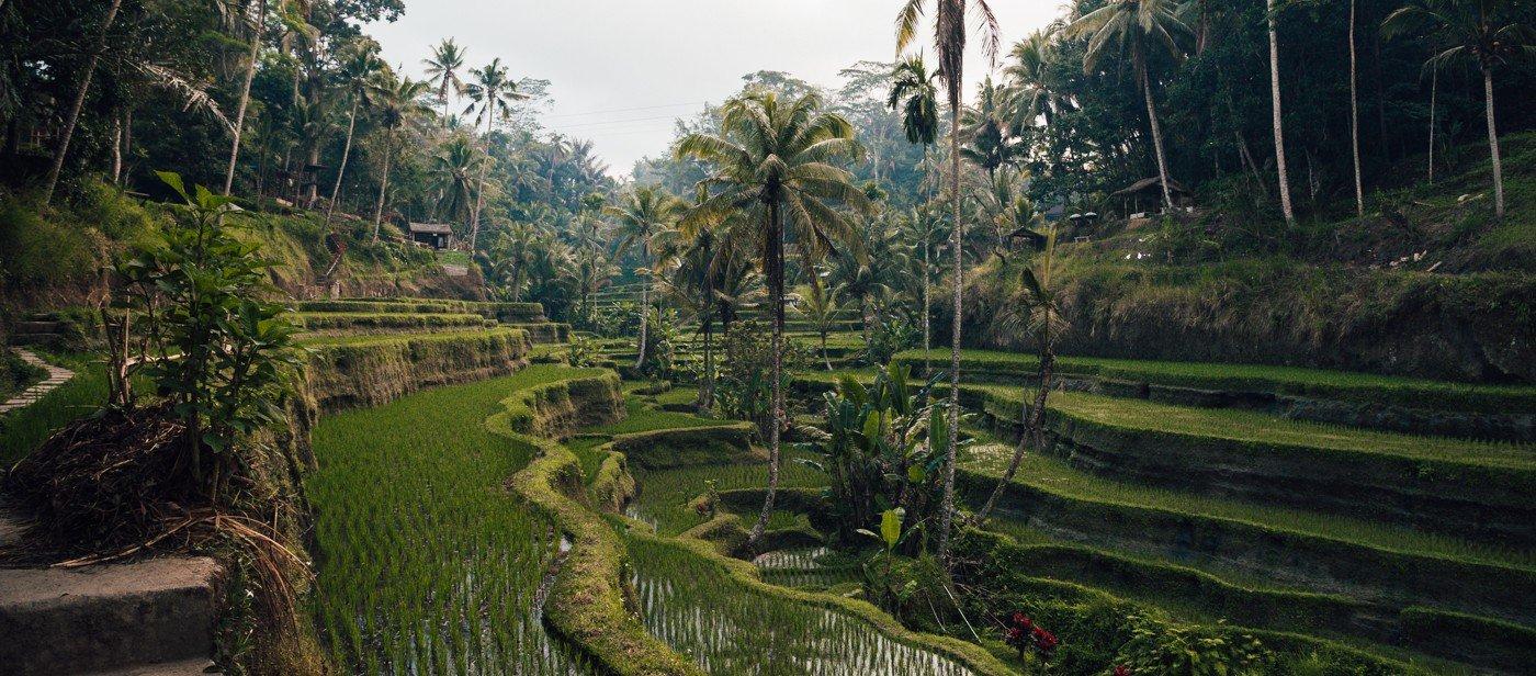 Terraços de Arroz de Tegallalang Bali
