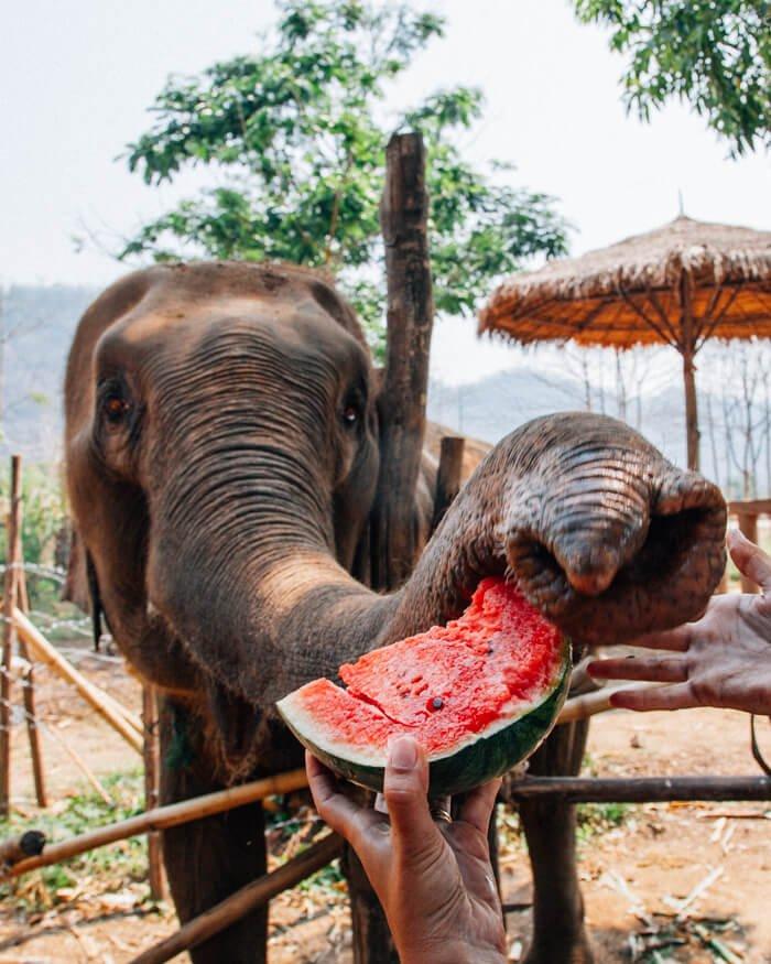 Chiang Mai, Tailândia - Elefantes
