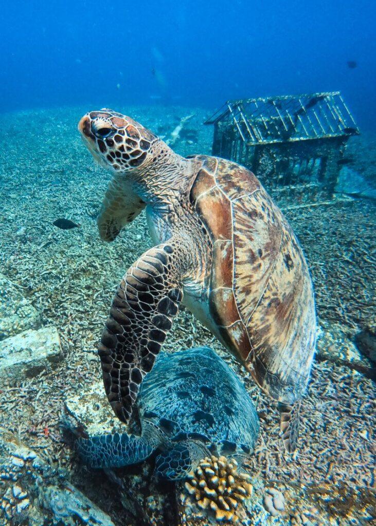 Ilhas Gili - Mergulho em Gili Air (tartaruga)