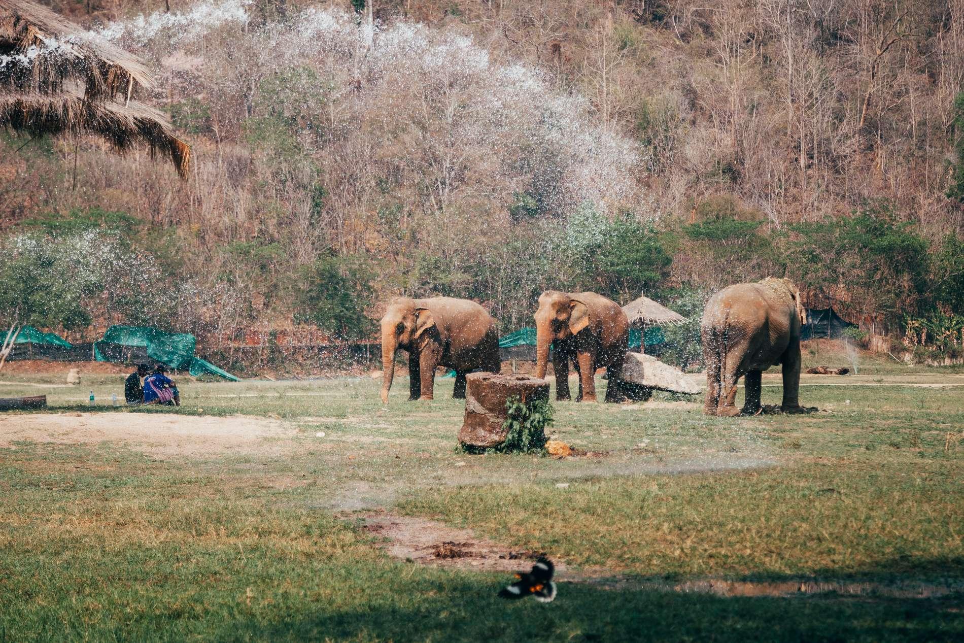Elephant Nature Park, Chiang Mai, Tailândia - elefantes tomando banho